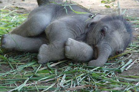 image Elephant liens  X52s3mzm